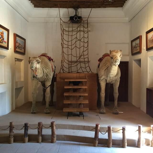 Camel museum