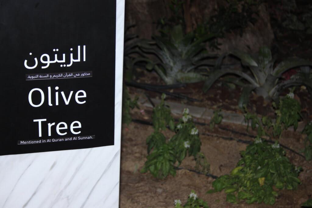 Olivia Tree Quran Park
